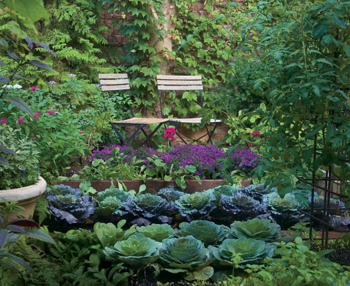 plant a gardent to grow your own food