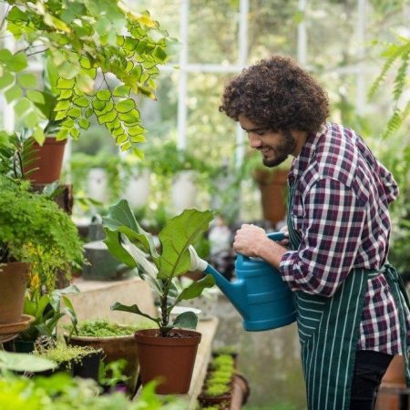 watering plants in a small greenhouse 1