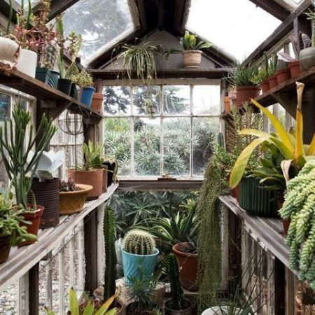 warm weather helps plants grow in small greenhouse 1 1