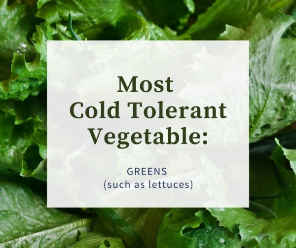 Most Cold Tolerant Vegetable