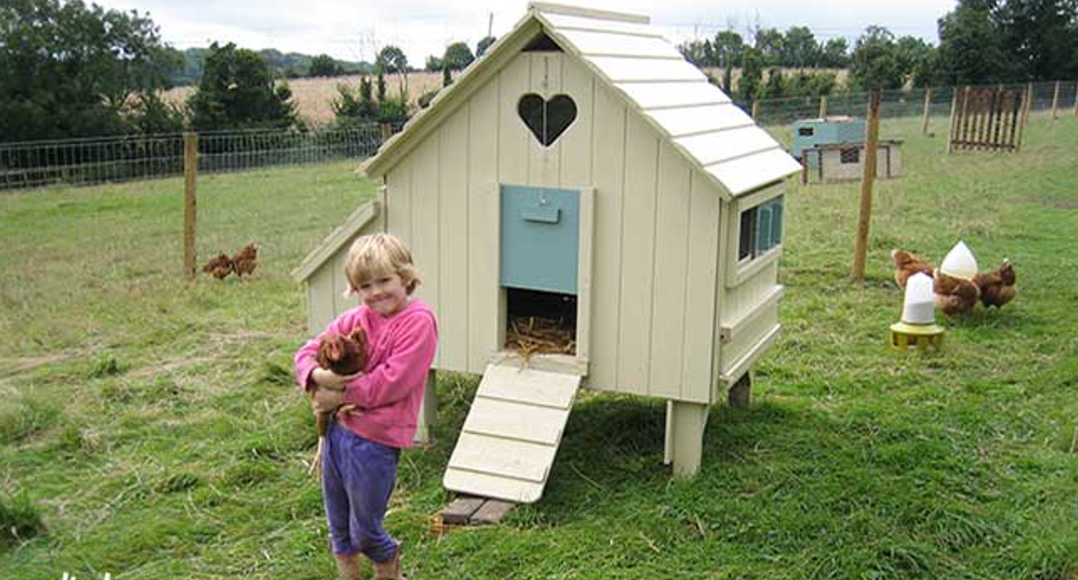 do chickens really need a coop countryside sheds